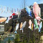 定山渓温泉渓流鯉のぼり2018年はいつ?日程やアクセス、駐車場情報・みどころ紹介