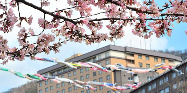 こいのぼり 桜