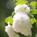 和歌山県のあじさい祭・名所 2019年の開催時期や見ごろ・開花情報