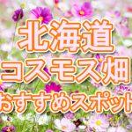 北海道 秋桜コスモス畑・名所・穴場 おすすめ人気スポット 2018年の見ごろは?