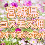 宮城県(東北) 秋桜コスモス畑・名所・穴場 おすすめ人気スポット 2018年の見ごろは?