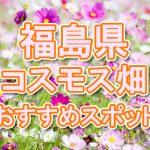 福島県(東北) 秋桜コスモス畑・名所・穴場 おすすめ人気スポット 2018年の見ごろは?