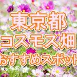 東京都(関東) 秋桜コスモス畑・名所・穴場 おすすめ人気スポット 2018年の見ごろは?