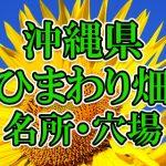 沖縄県のひまわり畑 オススメ人気スポット/名所/穴場・2018年イベント情報