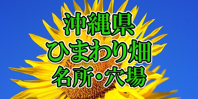 ひまわり畑 沖縄