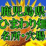 鹿児島県(九州)のひまわり畑 オススメ人気スポット/名所/穴場・2018年イベント情報