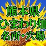 熊本県(九州)のひまわり畑 オススメ人気スポット/名所/穴場・2018年イベント情報