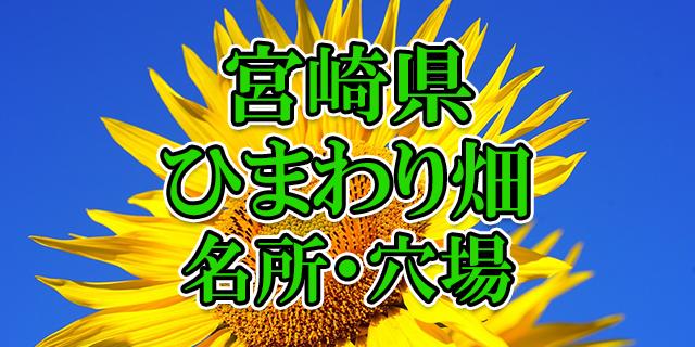 ヒマワリ畑 宮崎県