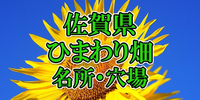 ヒマワリ畑 佐賀県