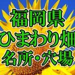 福岡県(九州)のひまわり畑 オススメ人気スポット/名所/穴場・2018年イベント情報