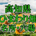 高知県(四国)のひまわり畑 オススメ人気スポット/名所/穴場・2018年イベント情報