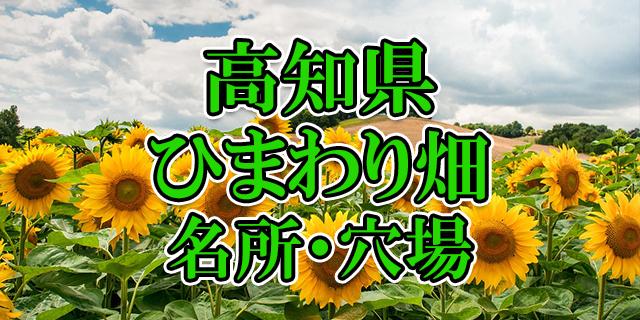 ひまわり畑 高知県