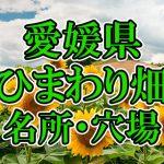 愛媛県(四国)のひまわり畑 オススメ人気スポット/名所/穴場・2018年イベント情報