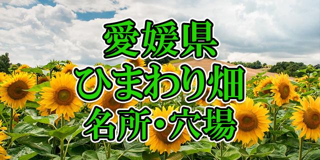 ひまわり畑 愛媛県