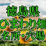 徳島県(四国)のひまわり畑 オススメ人気スポット/名所/穴場・2018年イベント情報