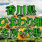 香川県(四国)のひまわり畑 オススメ人気スポット/名所/穴場・2018年イベント情報