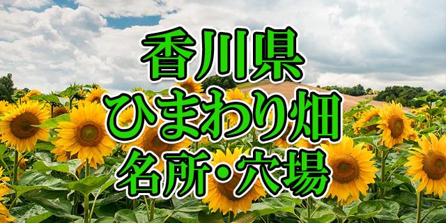 ひまわり畑 香川県