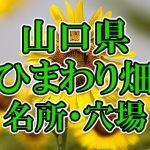 山口県(中国)のひまわり畑 オススメ人気スポット/名所/穴場・2018年イベント情報