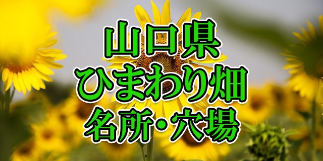 ひまわり畑 山口県