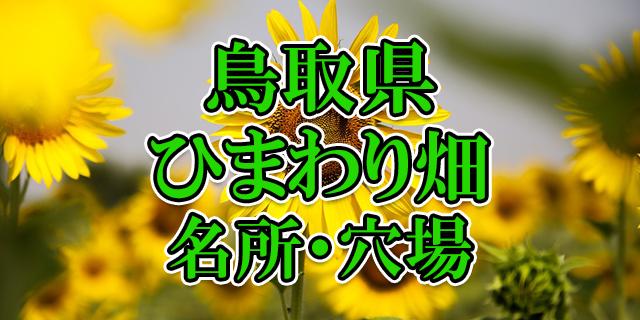 ひまわり畑 鳥取県