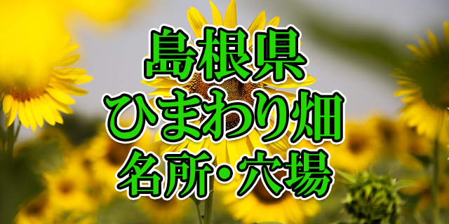 ひまわり畑 島根県