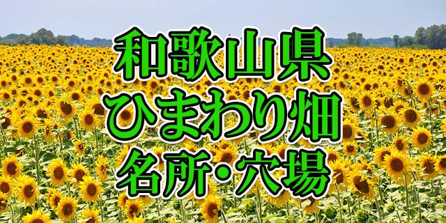 ひまわり畑 和歌山県