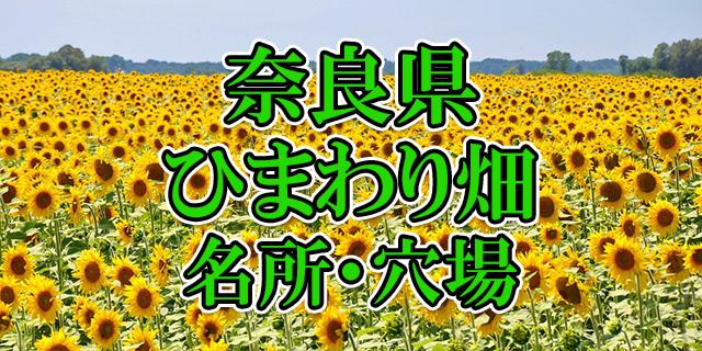 ひまわり畑 奈良県