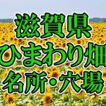 滋賀県(関西)のひまわり畑 オススメ人気スポット/名所/穴場・2018年イベント情報