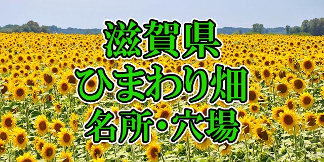 ひまわり畑 滋賀県