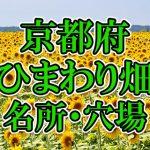 京都府(関西)のひまわり畑 オススメ人気スポット/名所/穴場・2018年イベント情報