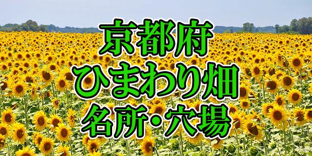 ひまわり畑 京都府