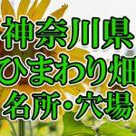 神奈川県(関東)のひまわり畑 オススメ人気スポット/名所/穴場・2018年イベント情報