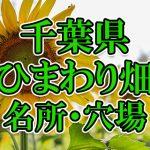 千葉県(関東)のひまわり畑 オススメ人気スポット/名所/穴場・2018年イベント情報