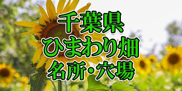 ひまわり畑 千葉県