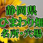 静岡県(東海)のひまわり畑 オススメ人気スポット/名所/穴場・2018年イベント情報