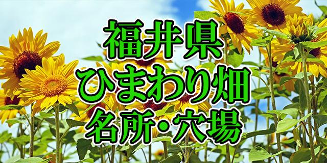 ひまわり畑 福井県