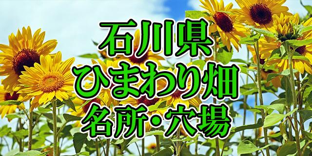 ひまわり畑 石川県