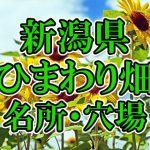 新潟県のひまわり畑 オススメ人気スポット/名所/穴場・2018年イベント情報