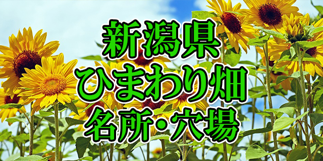 ひまわり畑 新潟県