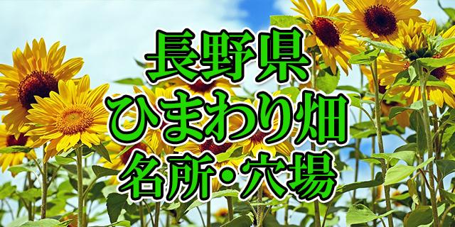 ひまわり畑 長野県