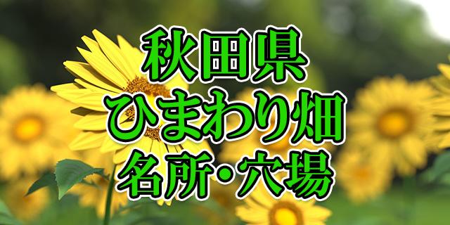 ひまわり畑 秋田県
