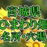 宮城県(東北)のひまわり畑 オススメ人気スポット/名所/穴場・2018年イベント情報