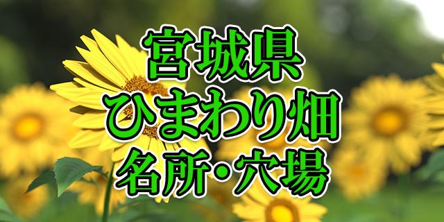ひまわり畑 宮城県
