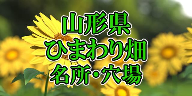 ひまわり畑 山形県