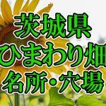茨城県(関東)のひまわり畑 オススメ人気スポット/名所/穴場・2018年イベント情報