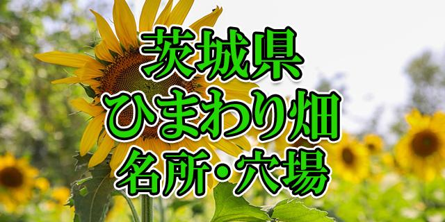 ひまわり畑 茨城県