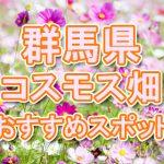 群馬県(関東) 秋桜コスモス畑・名所・穴場 おすすめ人気スポット 2018年の見ごろは?