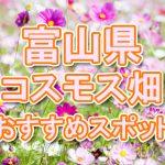 富山県(北陸) 秋桜コスモス畑・名所・穴場 おすすめ人気スポット 2018年の見ごろは?
