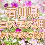 石川県(北陸) 秋桜コスモス畑・名所・穴場 おすすめ人気スポット 2018年の見ごろは?