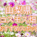 山梨県 秋桜コスモス畑・名所・穴場 おすすめ人気スポット 2018年の見ごろは?